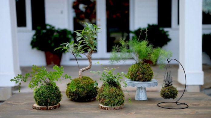 Kokedama - technika uprawiania roślin, która może Cię zaskoczyć