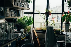 Kwiaty w burze - ich pozytywny wpływ na nasze zdrowie