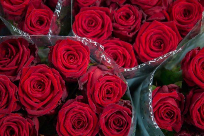 Красная Наоми Роуз