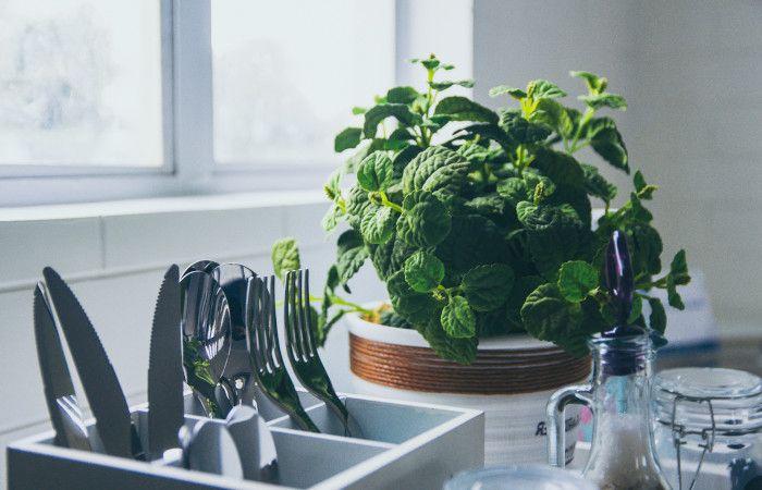 6 ważnych powodów dla których warto mieć żywe rośliny w domu