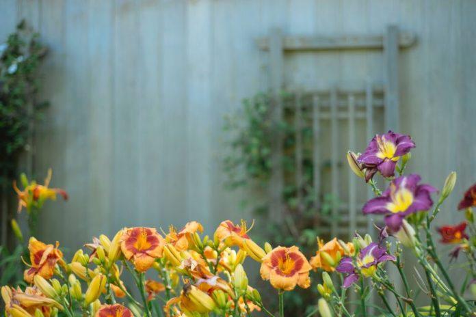 ogrodnictwo