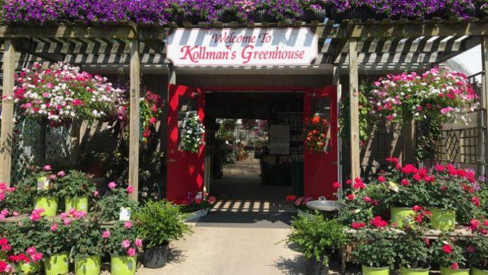 kollmans greenhouse