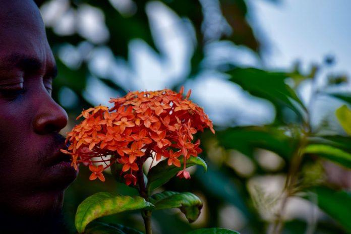 nigeryjskie kwiaty