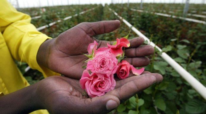 Kenijskie kwiaty