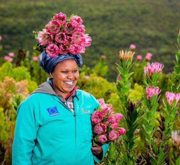 cape flora