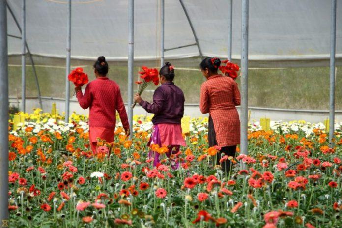 kwiaty w Nepalu