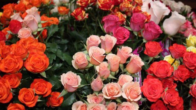 kwiaty w ekwadorze
