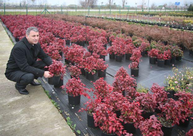 eksporterzy kwiatów