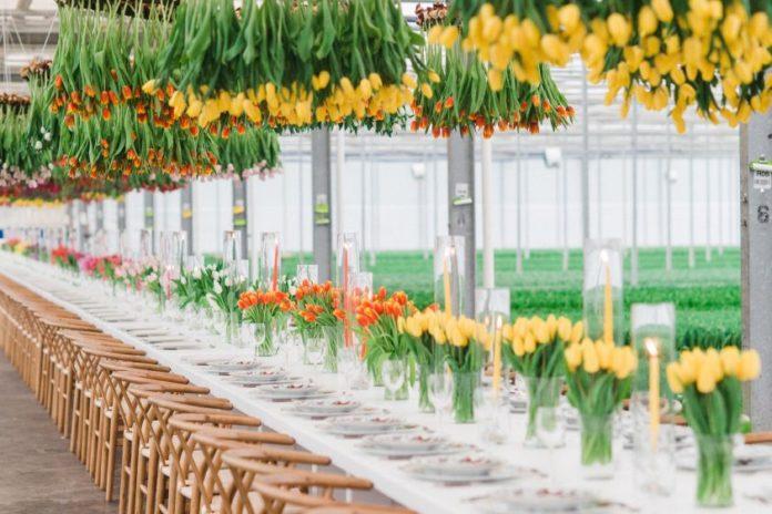 Tulipanowe żyrandole