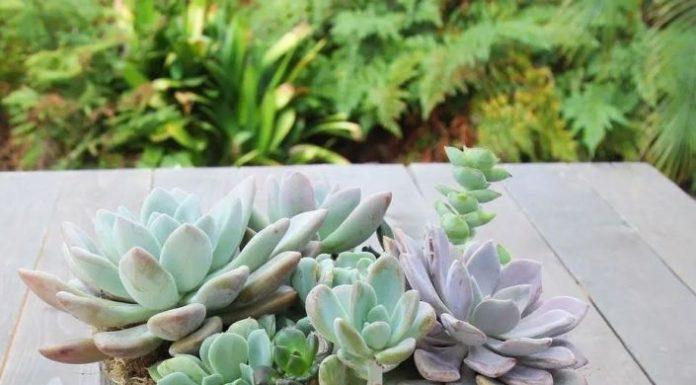 Kwiaty Balkonowe I Tarasowe Abc Florysty Portal Florystyczny