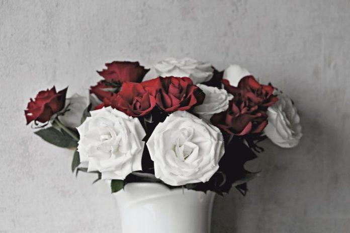 Co oznaczają białe róże?