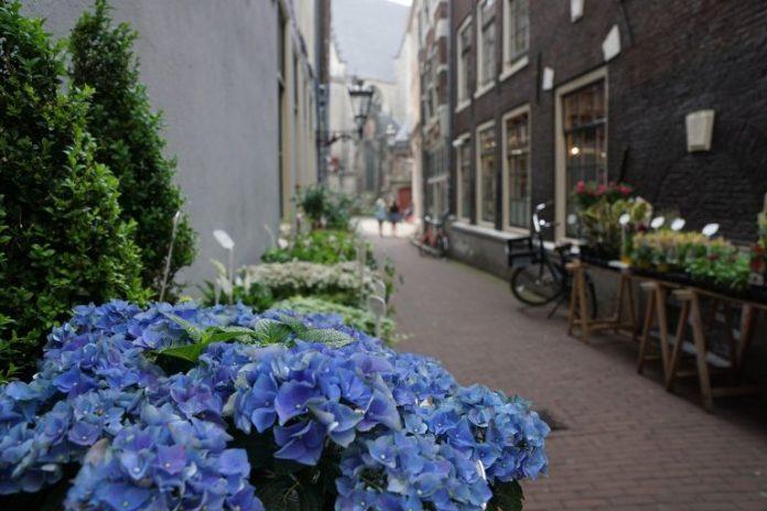 Czy kwiaciarnie i hurtownie przetrwają kryzys?